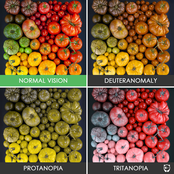Picture of Color Blindness